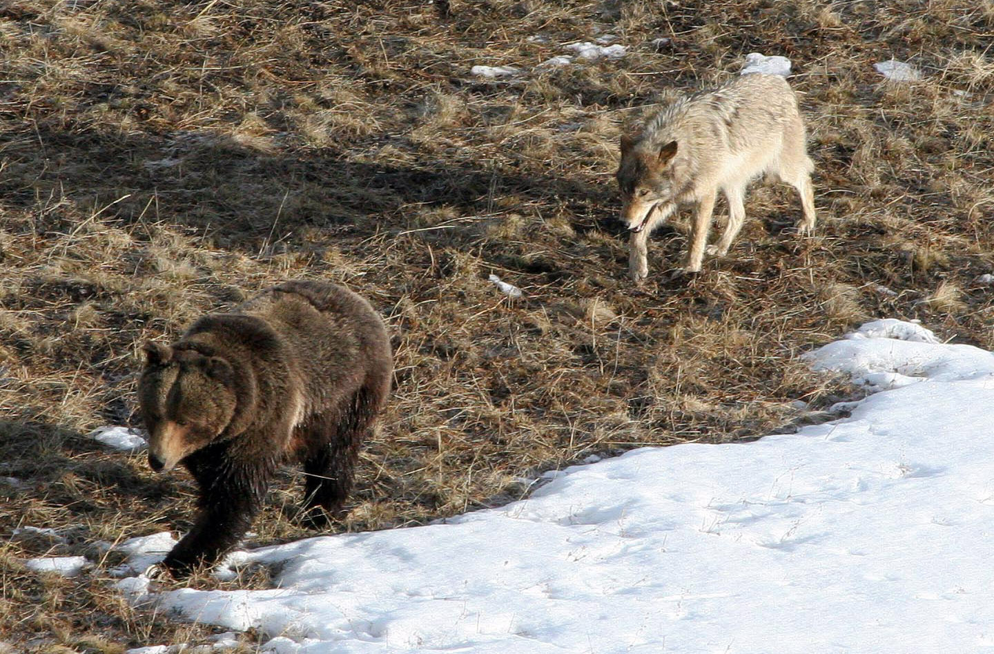 Yellowstone Park releases 2011 'Vital Signs' report on key natural