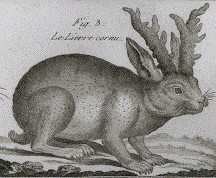 A 1789 jackalope drawing from Bonnaterre's Tableau Encyclopedique et Methodique.