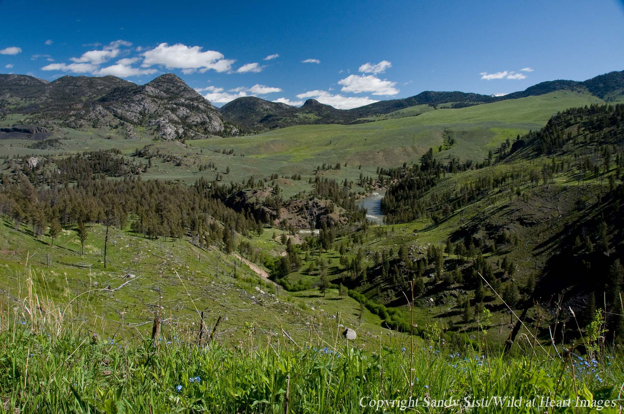 Switchbacks near the Hellroaring Creek trailhead in Yellowstone National Park offer expansive views of Hellroaring Mountain, Buffalo Plateau and the Yellowstone River. (photo © Sandy Sisti - click to enlarge)