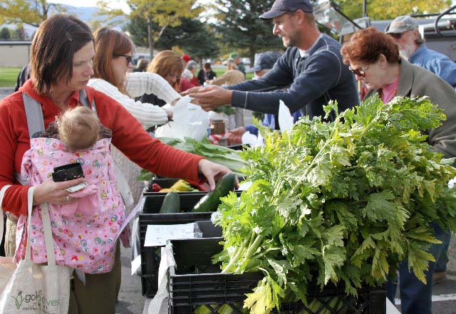 Cody resident Amy Quick browses produce offered by Shoshone River Farm at a farmers' market in Cody, Wyo. (Elijah Cobb/click to enlarge)
