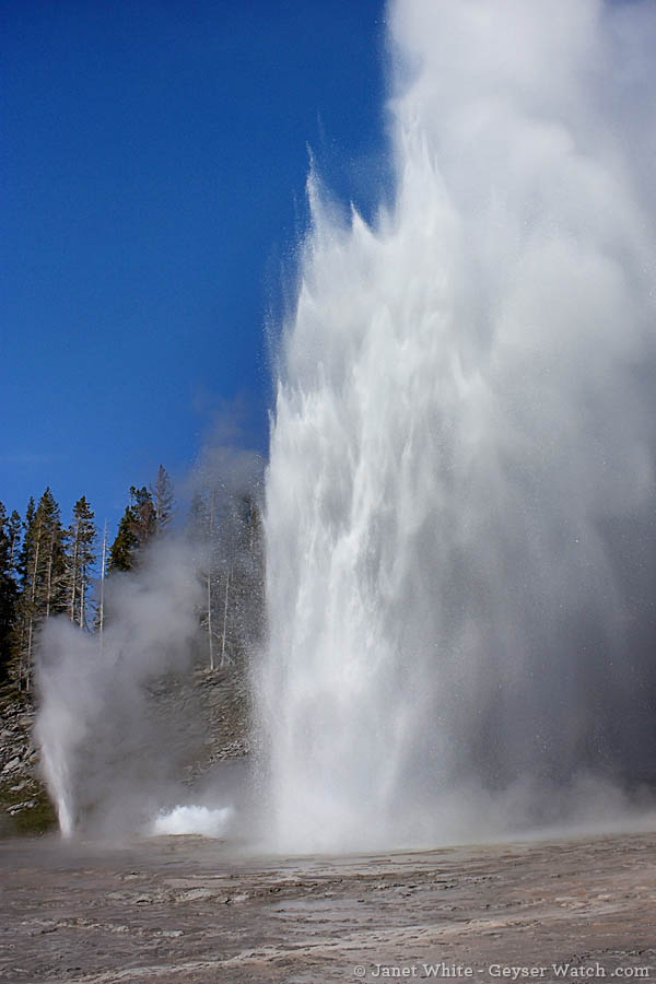 Grand Geyser is less predictable than Old Faithful, but possibly the grandest geyser in Yellowstone Park. (photo ©Janet White - click to enlarge)