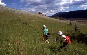 Yellowstone hikes - Lamar Valley