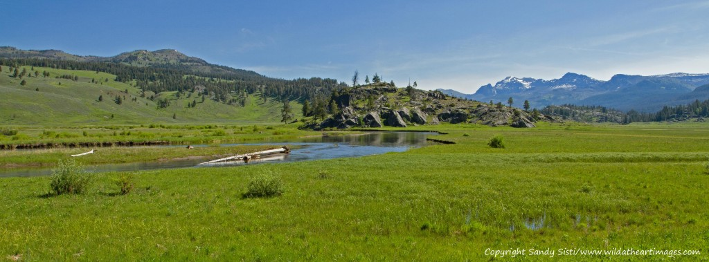 Slough Creek meanders through a meadow with Cutoff Mountain rising in the background. (©Sandy Sisti - click to enlarge)