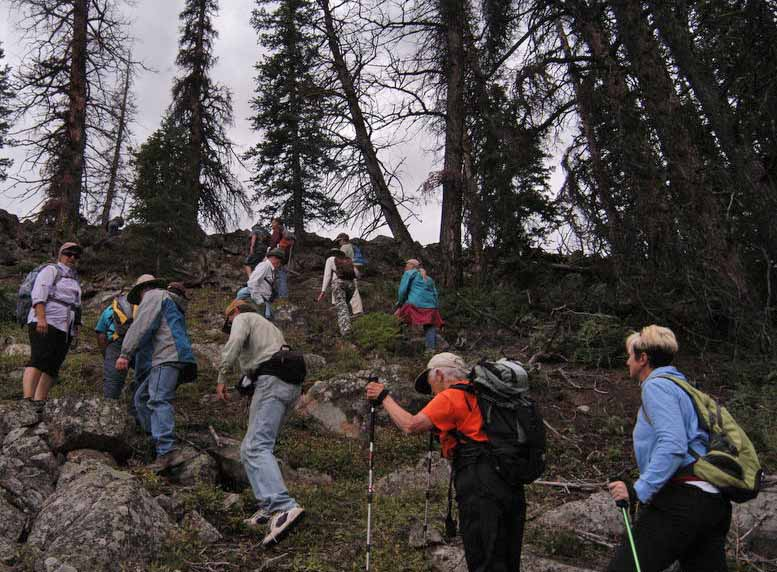 A group participtating in a field trip to the Wood River area of the Shohone Forest in northwestern Wyoming hikes through a stand of trees east of Yellowstone Park where researchers are working to learn more about the natural and human history of the region. (Ruffin Prevost/Yellowstone Gate - click to enlarge)