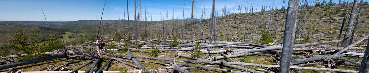 Jeannette Boner looks into the Upper Pelican Valley from the southern end of the Mirror Plateau in Yellowstone National Park. Fires and beetle-killed trees that have fallen over several dozen years have made travel across the plateau slow and tedious. (Bradly J. Boner/WyoFile — click to enlarge)