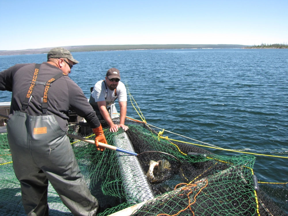 The Hickey Brothers, a contractor boat for the National Park Service, use trapnets to try and reel in lake trout. The fish has been growing in Yellowstone lakes at an exponential rate and overfeeding on the Yellowstone cutthroat, threatening the park's entire ecosystem. (Dan Hottle/NPS — click to enlarge)