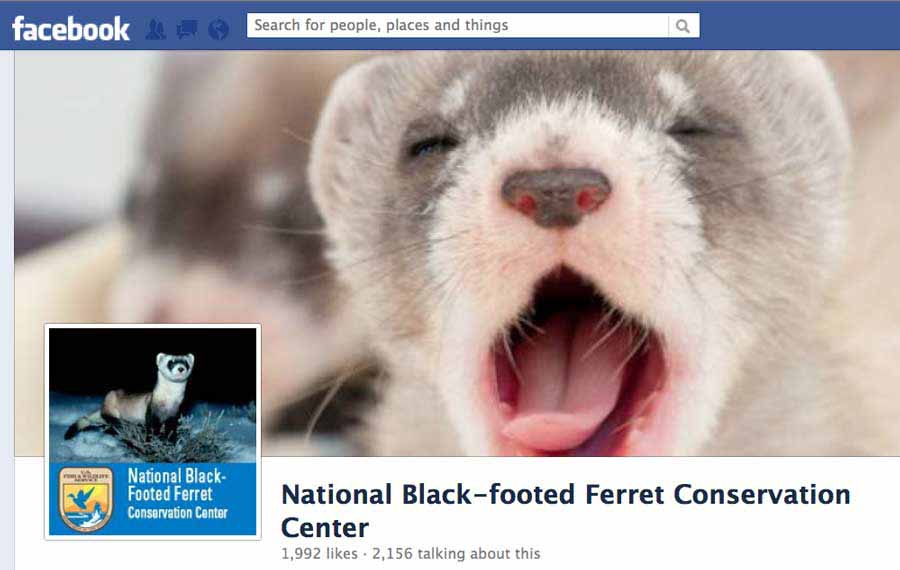 Federal wildlife managers are using social media tools like Facebook pages and YouTube videos to raise awareness of recovery efforts for the endangered black-footed ferret.