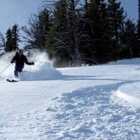 A skier makes fresh tracks in new powder at the Bridger Bowl Ski Area near Bozeman, Mont. (courtesy photo by Montana Office of Tourism)