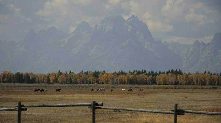 Horses graze in a pasture in Grand Teton National Park. Breana Taylor Natrona County High School