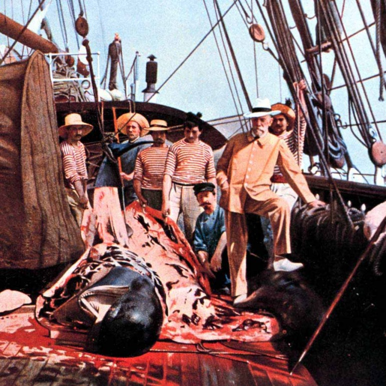 A hand-colored photograph from 1897 shows Prince Albert I of Monaco observing a shipboard necropsy of a juvenile sperm whale.