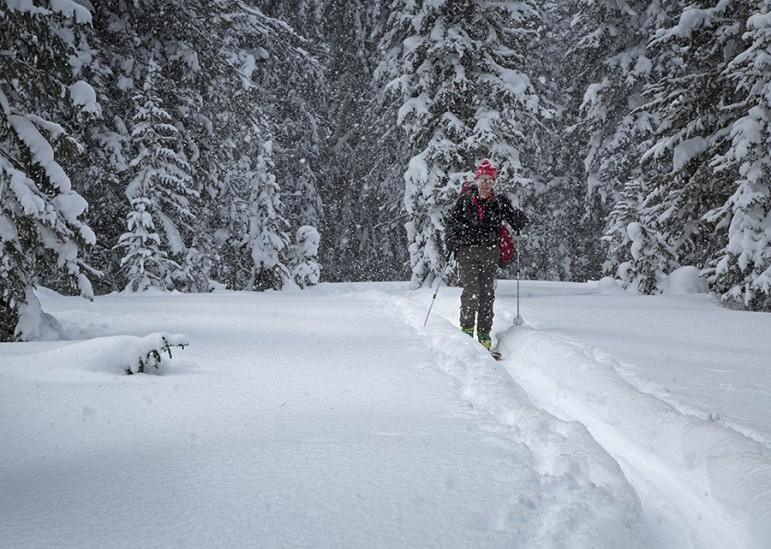 A participant in a 3-day avalanche course skis the 2.5-mile route uphill from Cooke City, Mont. to a remote cabin.