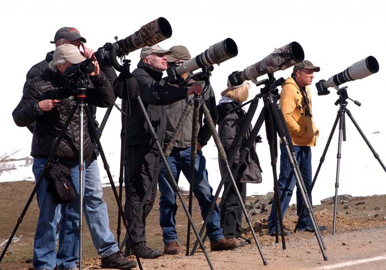 Photographers gather near Steamboat Point in Yellowstone National Park to take pictures of a young grizzly bear foraging on a hillside.