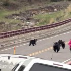 bear-bridge