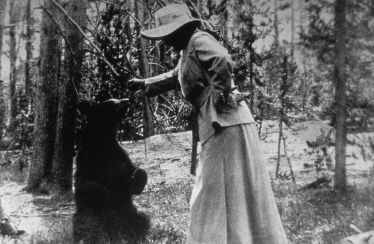A woman feeds a bear during an early visit to Yellowstone National Park.