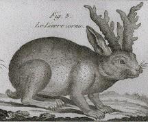 A 1789 jackalope drawing from Bonnaterre's Tableau Encyclopedique et Methodique.