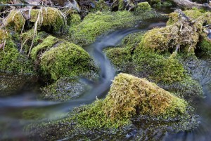 Water blurs as it moves through moss-covered rocks. (© Christopher Cauble photo - click to enlarge)