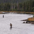 Dry, hot weather has prompted Yellowstone Park officials to close some rivers to fishing.(Yellowstone Gate/Ruffin Prevost - click to enlarge)