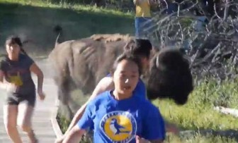 An Aug. 4 video posted to YouTube illustrates the importance of keeping a safe distance from wildlife in Yellowstone and Grand Teton National Parks. (YouTube video)