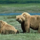 There is no evidence linking menstruation to any of the nine attacks on women in Yellowstone National Park since 1980. (USFWS photo - click to enlarge)