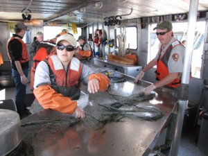 NPS personnel perform gillnetting on captured lake trout. Such coordinated efforts are key to suppressing the lake trout population. (Dan Hottle/NPS — click to enlarge)