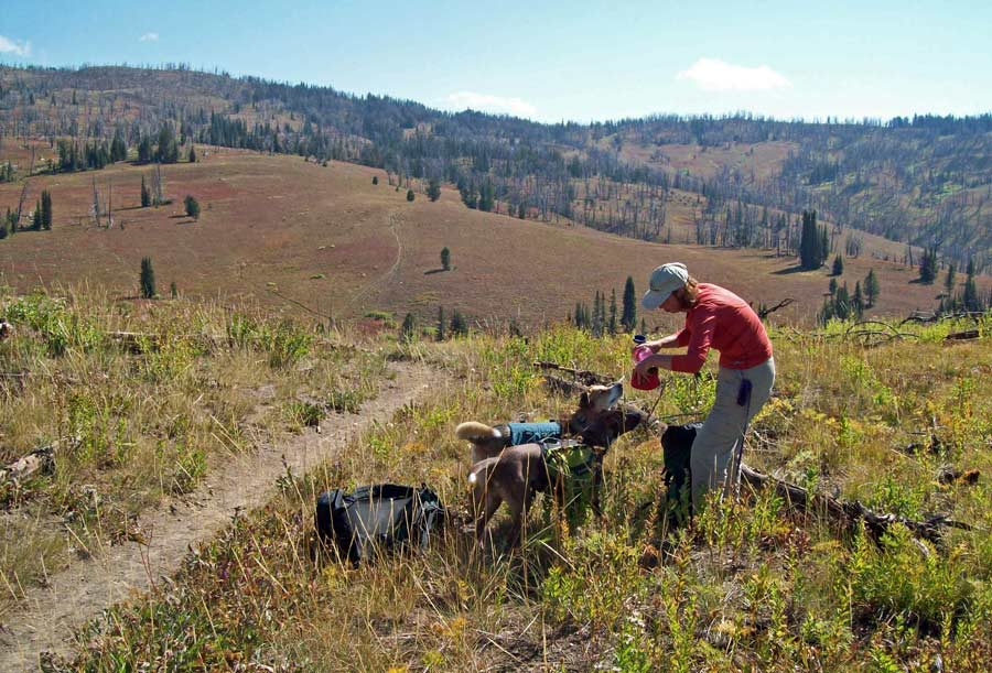 Deb Ehlers tends to her dogs, Kirwin and Maggie, on the Huckleberry Mountain trail in the Bridger-Teton National Forest. (Tom Ehlers, Jr. - click to enlarge)