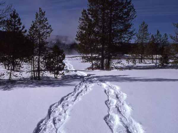 Grand Teton National Park rangers will offer daily snowshoe hikes this winter, as well as special full-moon hikes on selected days.