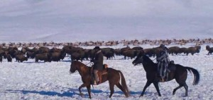 Bison and elk from the National Elk Refuge are visible in a shot from the trailer of Django Unchained. (©Columbia Pictures - click to enlarge)