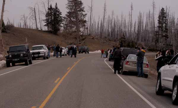 Wildlife watchers hoping to catch a glimpse of a grizzly sow and her cub line the roadside Friday between Sedge Bay and Lake Butte Overlook in Yellowstone National Park. (Ruffin Prevost/Yellowstone Gate)