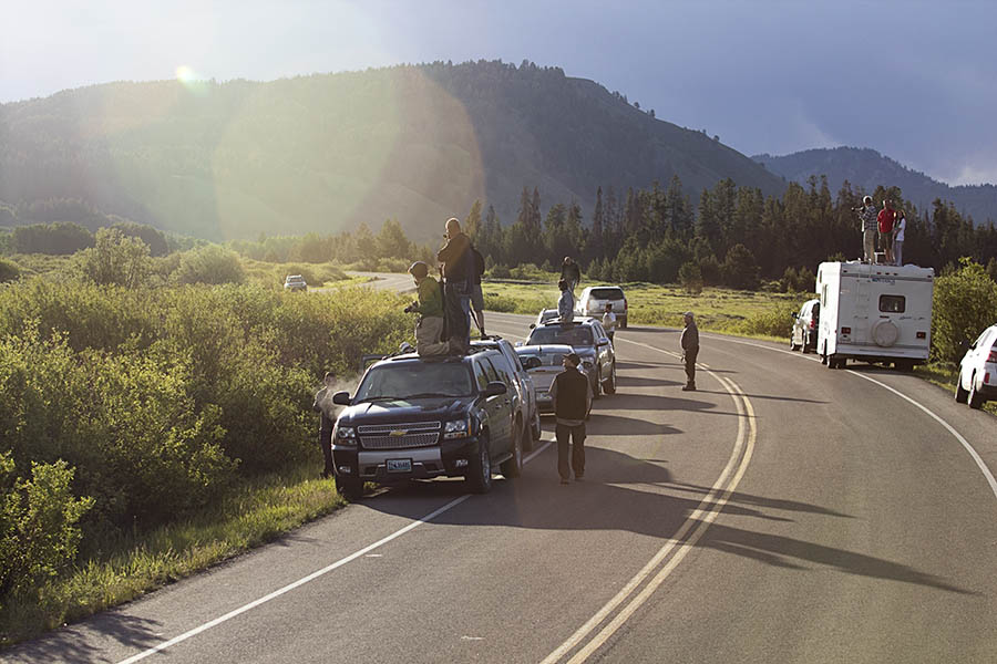 Wildlife watchers line the road and strain for a glimpse of bears in Grand Teton National Park. (© Janet White/GeyserWatch.com)