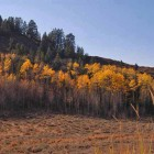 Trees near the Cache Creek trailhead in the Bridger-Teton National Forest show off their best fall colors near Jackson, Wyo.