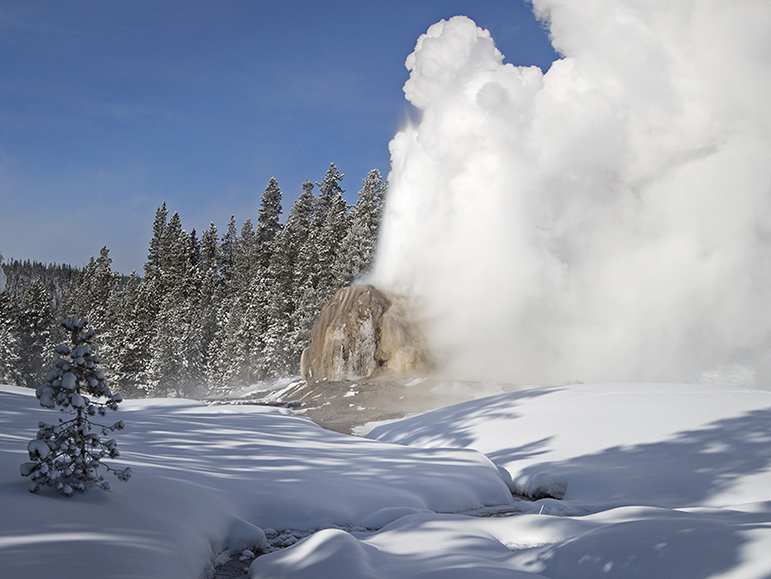 The remote Lone Star Geyser erupts under blue winter skies in Yellowstone National Park.
