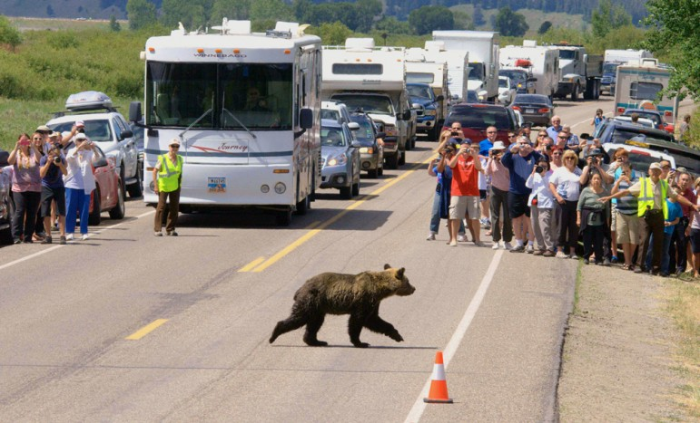 In Grand Teton National Park just south of Yellowstone, a volunteer wildlife brigade is trained each year to help manage people at bear jams. Both parks' programs run up consideral expense, but a study says roadside bears in Yellowstone bring more than $10 million annually to the regional economy.