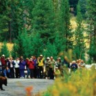 Yellowstone National Park managers are looking for ways to more effectively deliver safety messages about watching bears, wolves and other wildlife at roadside traffic jams.