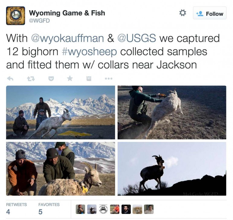 Researchers with the Wyoming Migration Initiative post images form their work on social media channels.