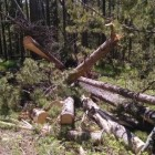Strong winds in Grand Teton National Park toppled more than 150 trees Monday evening, leaving crews scrambling to clear roads and restore electrical power.