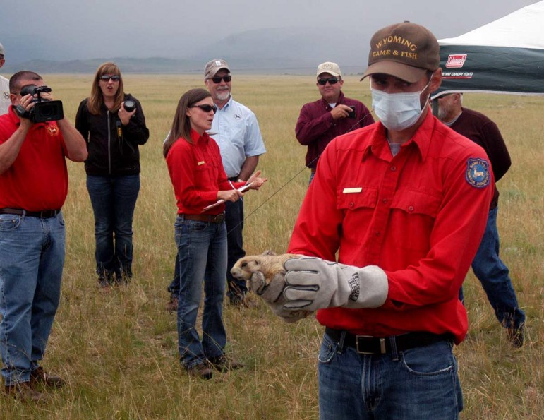 Wyoming Game and Fish Department biologist Jesse Boulerice is leading a field trial for a plague vaccine among prairie dogs at the Pitchfork Ranch near Meeteetse, Wyo.
