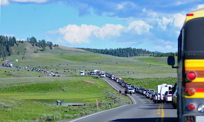 Bison in Yellowstone National Park cause a traffic jam on the road through Hayden Valley in July 2010.