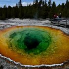 A rare thermophilic virus found in the hot waters of Yellowstone National Park may be behind strange animal behavior in the region.